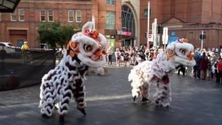 Download Lion dance Haymarket Sydney Feb 2017 Video