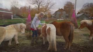Download Meet my horses! Video