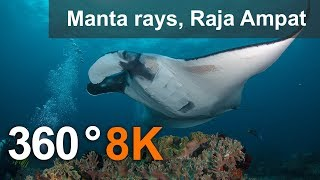 Download Diving with Manta Ray, Raja Ampat. 8K underwater 360 video Video