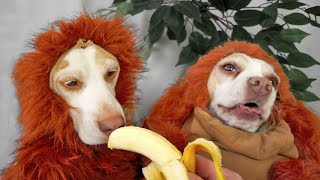 Download Disguise Wizardry 101: Cute Dogs Maymo & Penny Video