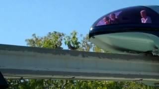 Download Ducks blocking the monorail train in Disneyland, Anaheim, CA Video