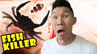 Download FISH KILLER CRAB CAUSES AQUARIUM DISASTER - Life After College: Ep. 504 Video