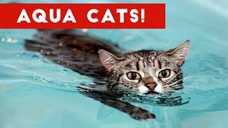 Download Cutest Cats Playing in Water Compilation 2017 | Best Cute Cat Videos Ever Video