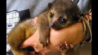 Download CUTEST Exotic Pets You Can Legally Own Video