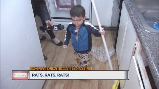 Download Moms say apartments under siege from rats Video