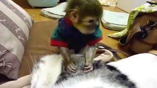 Download Khỉ bắt rận cho mèo cực dễ thương Video