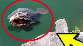 Download Extinct Animals CAUGHT on Camera Video