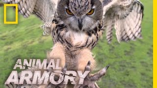 Download Terrifying Talons | Animal Armory Video
