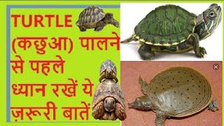 Download turtle care Hindi/Urdu कछुआ/टृटल Video