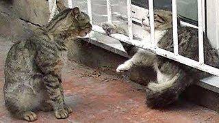 Download ビビッていた猫を助けたら鳴きながら懐いてついて来た! Video