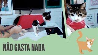 Download DIY: COMO FAZER ROUPA CIRÚRGICA PARA GATOS Video