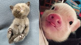 Download Funny Baby Animals Videos Compilation - Funny Moments Video
