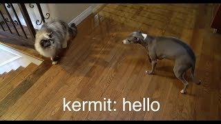 Download My Dogs Meet A Cat Video