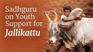Download Sadhguru on Youth Support for Jallikattu Video