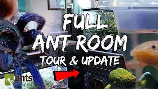 Download Full 2019 Ant Room Tour & Update Video (Millions of Ants + Other Animals) Video