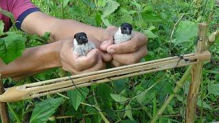 Download membuat Jebakan burung kutilang umpan jangkrik dalam bambu Video