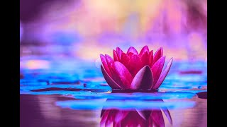 Download Miracle Music Healing 528Hz | Enhance Self Love | Positive Energy Cleanse | Meditative Music Healing Video