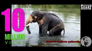 Download ELEPHANT DANGERIOUS @ PALLURUTHY sudheer palluruthy Video