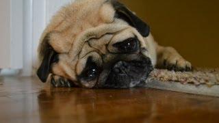 Download Sad Dog Diary Video