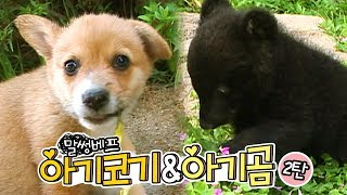 Download 힙합스웩 쩌는! 악동래퍼 웰시코기&곰   SBS 동물농장x애니멀봐 Video
