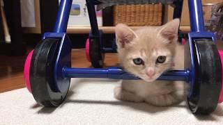 Download 器用な寝方をする子猫  Kitten that makes dexterous sleeping Video