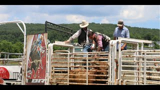 Download Raising bucking bulls for the rodeo Video