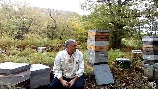 Download Michel Perosanz, apiculteur en Aveyron Video