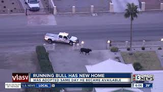 Download Running bull has a new home Video
