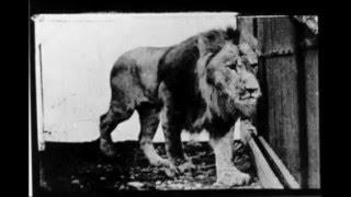 Download Eadweard Muybridge Photographs of Motion Video