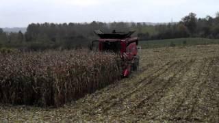 Download maïs 2014 Video