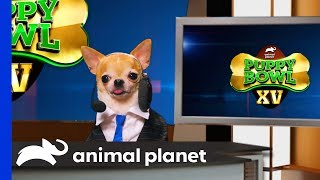 Download Around the Bowl & Spot Center   Puppy Bowl XV Video