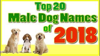 Download Top 20 popular Male Dog Names With Meanings ! Boy Dog Names Video