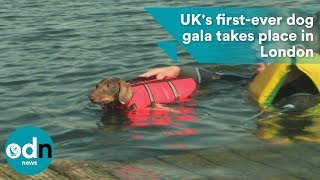 Download UK's first-ever dog gala takes place in London Video
