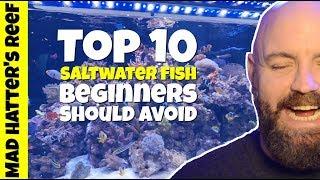 Download Top 10 Saltwater Fish Beginners Should Avoid Video