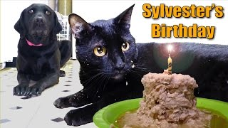 Download Talking Kitty Cat 35 - Sylvester's Birthday 2014 Video