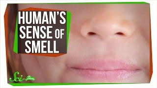 Download Your Sense of Smell Is Better Than You Think Video