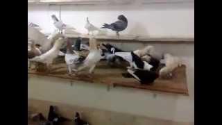 Download Suriyeden Filo Kuşları 2015 Video