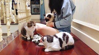 Download 主人想给猫咪们一个惊喜,藏在收纳袋里然后突然出现在它们面前,然而... Video