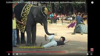 Download ELEPHANTS REALLY HAVE GOT TALENT, PATTAYA, THAILAND Video