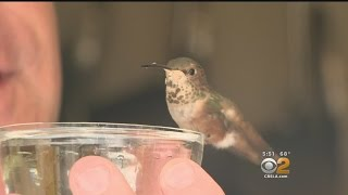 Download Man Goes The Distance For Tiny Hummingbird His Dog Helped Rescue Video