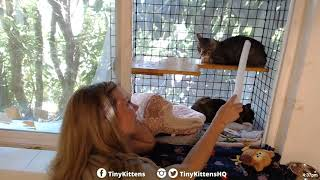 Download Hyatt the blind feral cat finally gets a diagnosis! TinyKittens Video