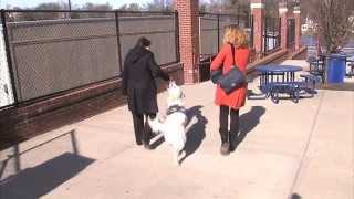 Download Warrior Canine Connection - Puppy Parent Video