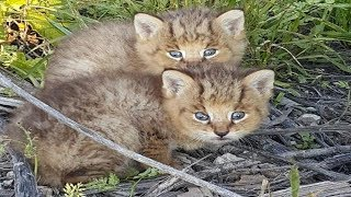 Download When Teen Found Kittens By Side Of Road. He Didn't Realize They Weren't What They Seem Video
