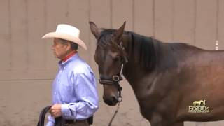Download Learning to Use The Dually Halter Video