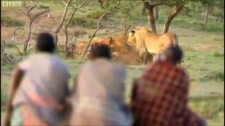 Download Man vs Nature Lion Vs Man Theif Vs Lion Video