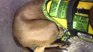 Download Service Dog Denied Access Video