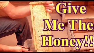 Download Beekeeping : How To Harvest Honey Video