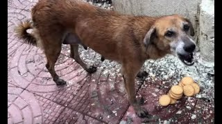 Download Dog Mom Ask Me To Save Her Puppies // POWER OF MOTHER Video