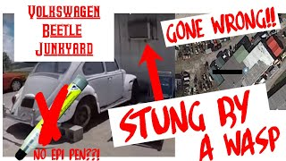 Download Volkswagen Beetle Junkyard Hunting GONE WRONG!! Stung By A Wasp!! NO EpiPen!! Video