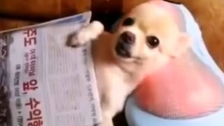 Download Funny Videos Of Funny Animals NEW 2015 Video